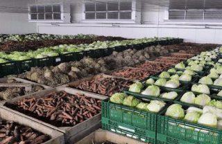 Строительство овощехранилищ